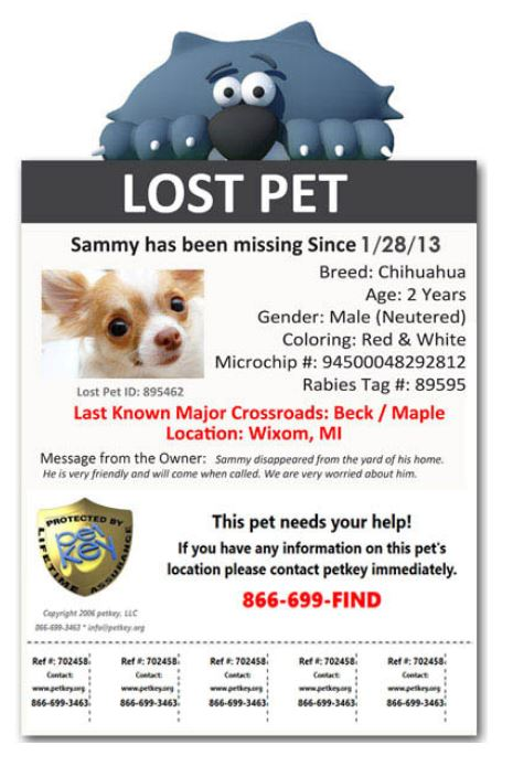 Lifetime Protection  Lost Pet Poster